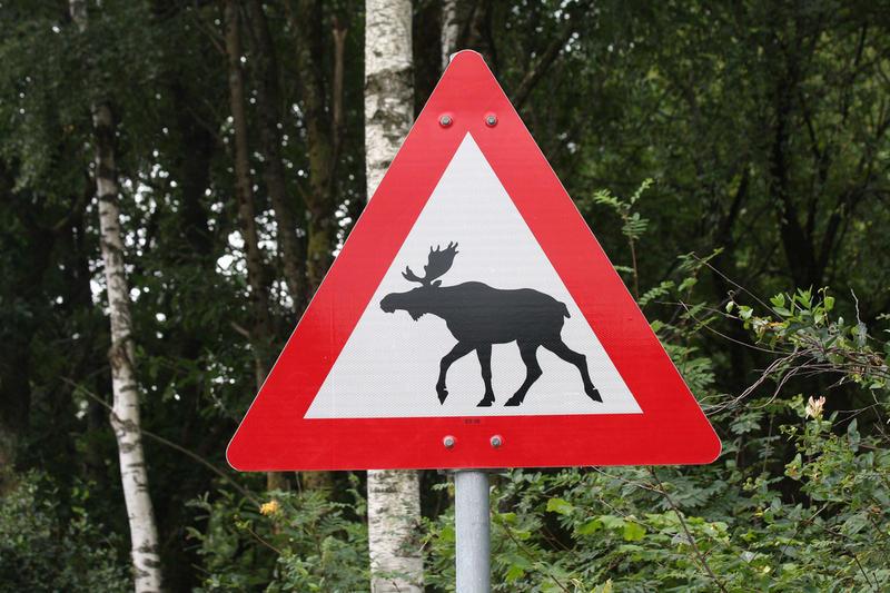 Животные на дороге: сколько стоит жизнь белоруса?