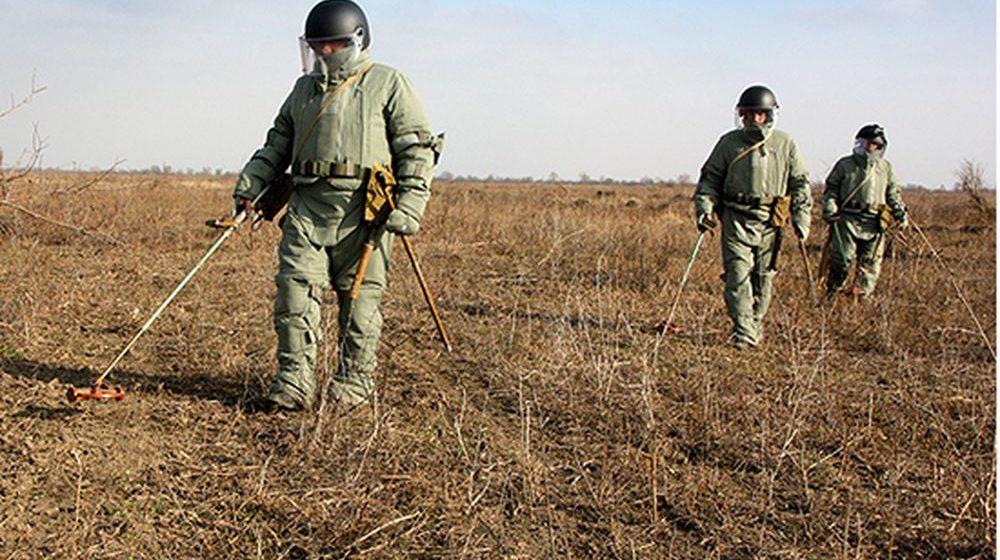 Барановичские саперы обезвредили две авиабомбы, которые обнаружили при лесозаготовке в Ивацевичском районе