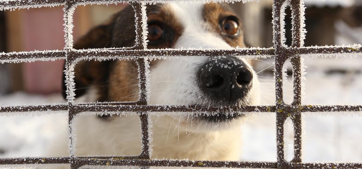 В Барановичах подвели итоги общественного обсуждения строительства приюта для бездомных животных