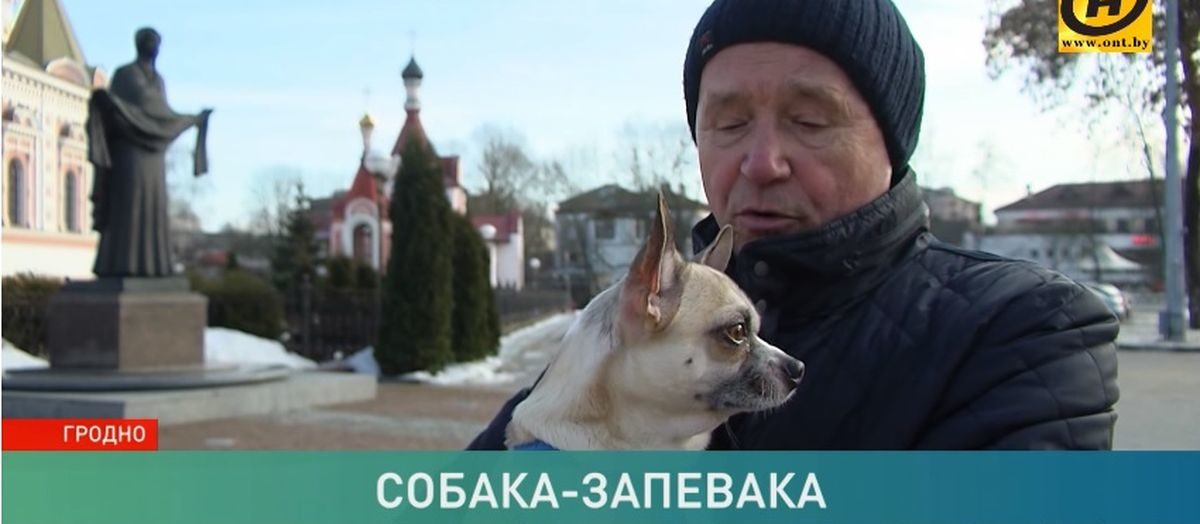 В Гродно живет пес, который подпевает колоколам (видео)