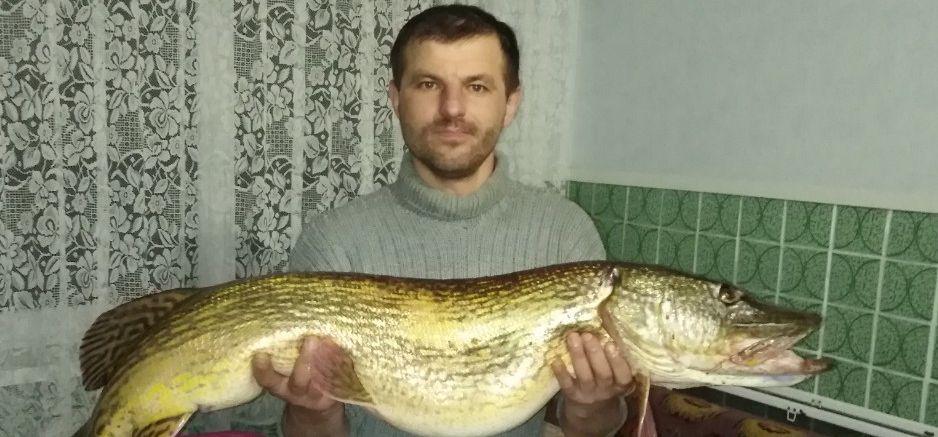 «Сам был в шоке» – барановичский рыбак поймал щуку весом 11,6 кг (фотофакт)
