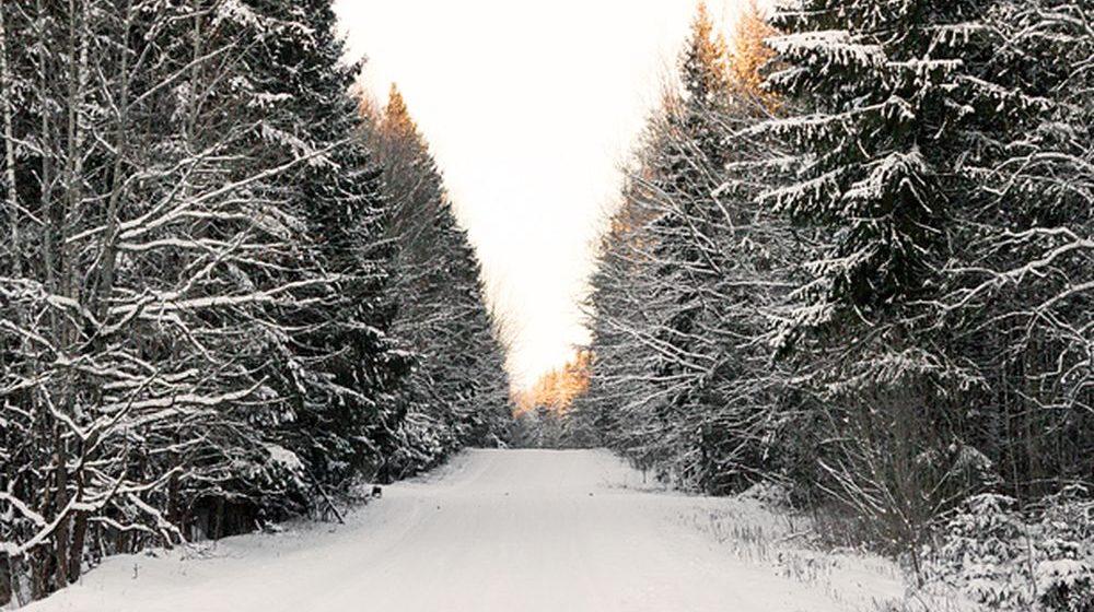 «Шел пешком три-четыре километра». Мама мальчика, которого «забыли» в лесу, рассказала, что произошло