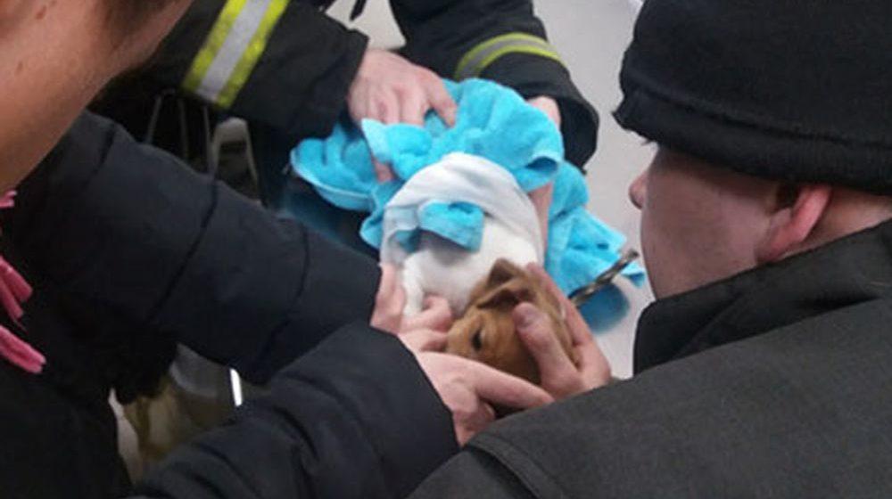 Застрявшего в вешалке щенка спасли сотрудники минского МЧС (фото)