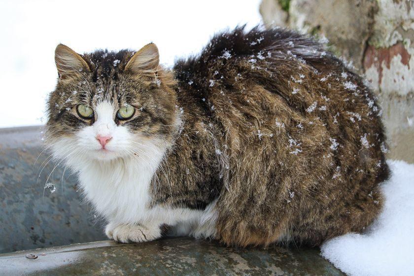 Погода 2 марта: в выходные в Барановичах похолодает