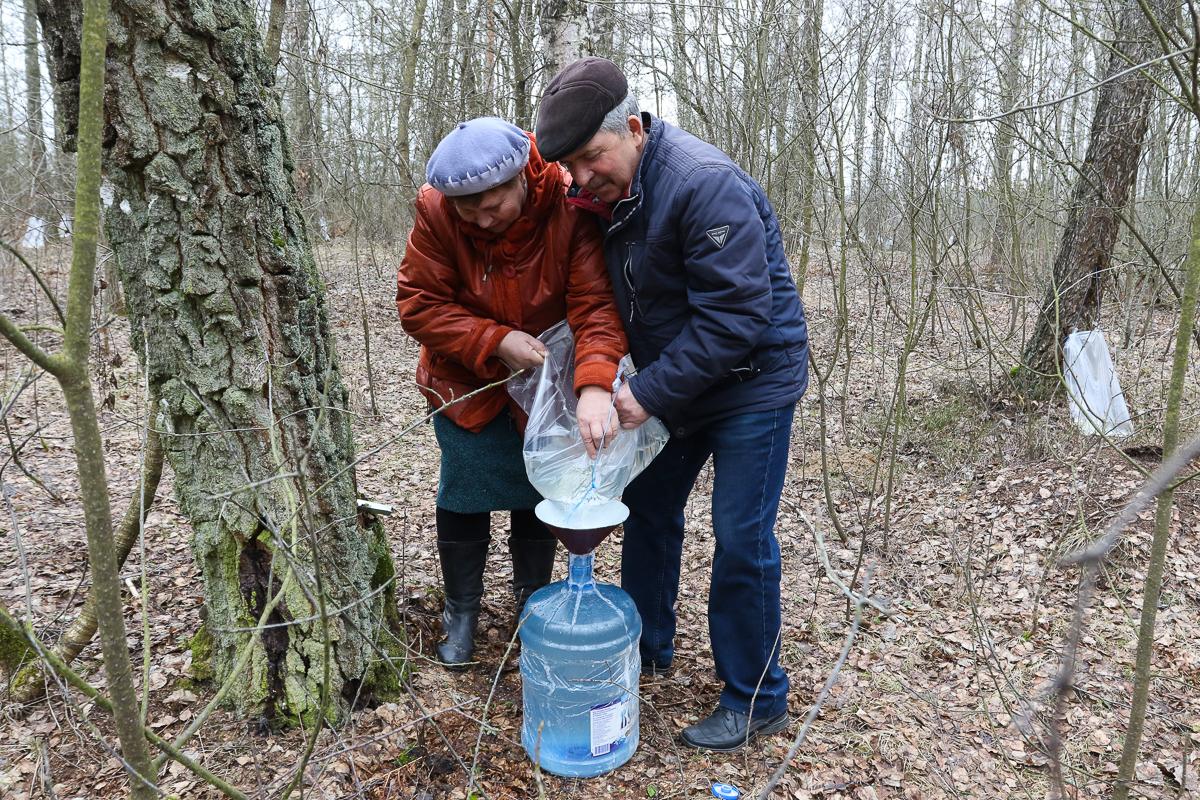В березовой роще недалеко от агрогородка Столовичи реализуют сок населению. Фото: Александр ЧЕРНЫЙ