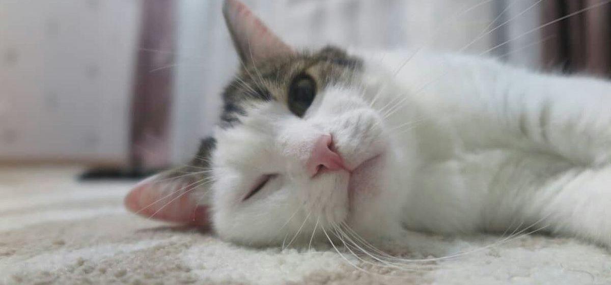 Тест. Кто хозяин в доме: кот или ты?