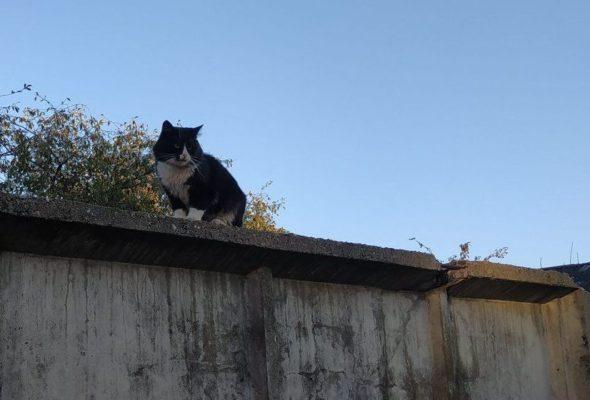 «Мартовские коты». Фотоконкурс для читателей Intex-press