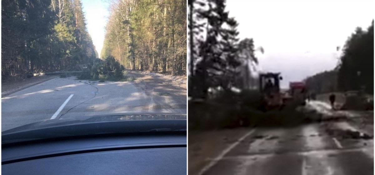 Сильный ветер оставил без электричества 271 населенный пункт в Беларуси (фото)
