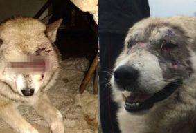 «Люди записывались в очередь, чтобы выгулять Борьку». Как сложилась судьба собаки, которую нашли с «выколотыми» глазами