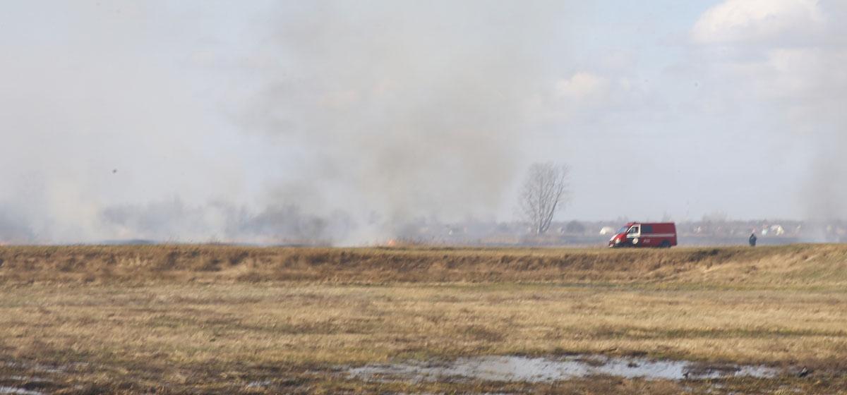 Стена огня. В разных районах Барановичей продолжают жечь траву (видео, фото)