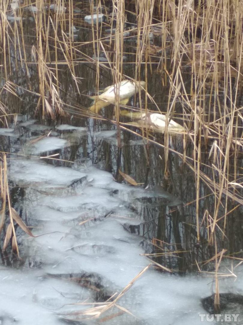 Фото: Рыбалка в Беларуси