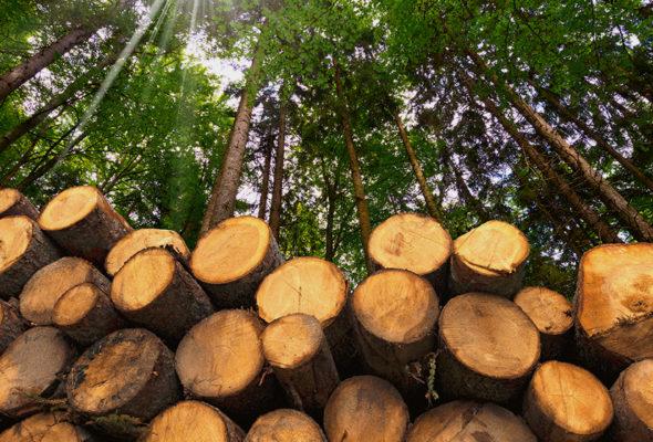 Надежная защита дерева от вредителей