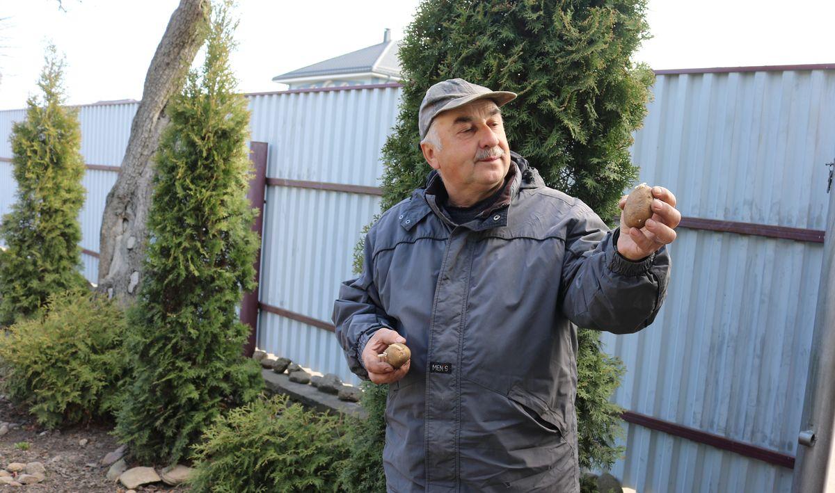 Петр Ломонос советует для посадки выбирать клубни весом 50-80 граммов с толстыми, крепкими ростками. Фото: Александр ЧЕРНЫЙ