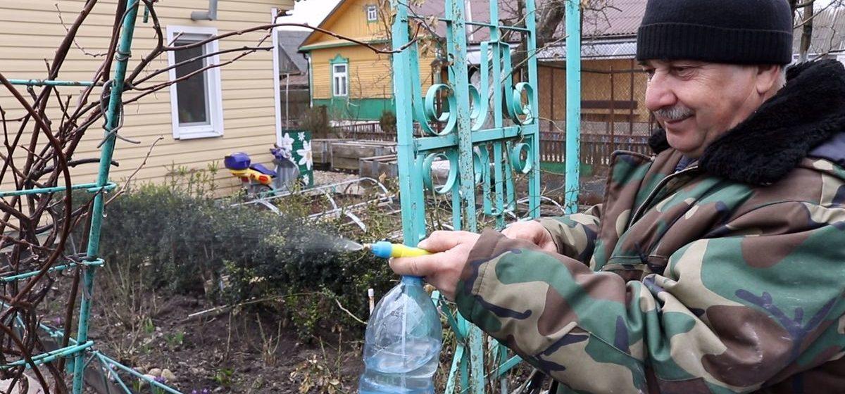 Как и чем обработать сад весной от вредителей и болезней (видео)
