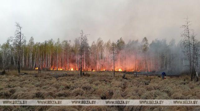 Площадь пожара на территории Ольманских болот увеличилась до 400 га