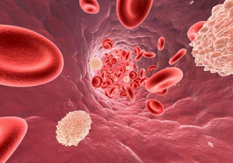 Эти растения помогут снизить уровень холестерина в крови