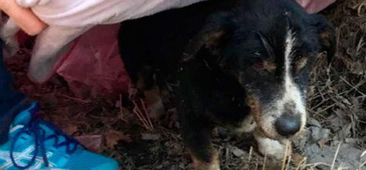 В России похороненный пес выбрался из могилы и вернулся к хозяевам