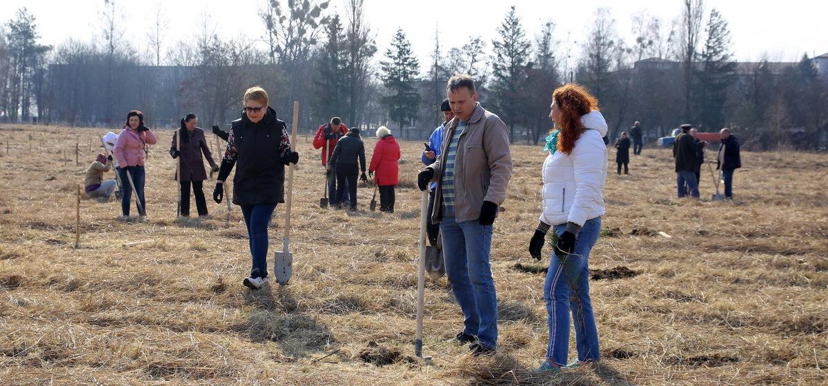 Субботник в Барановичах. Что убирали и какие деревья посадили (фоторепортаж)