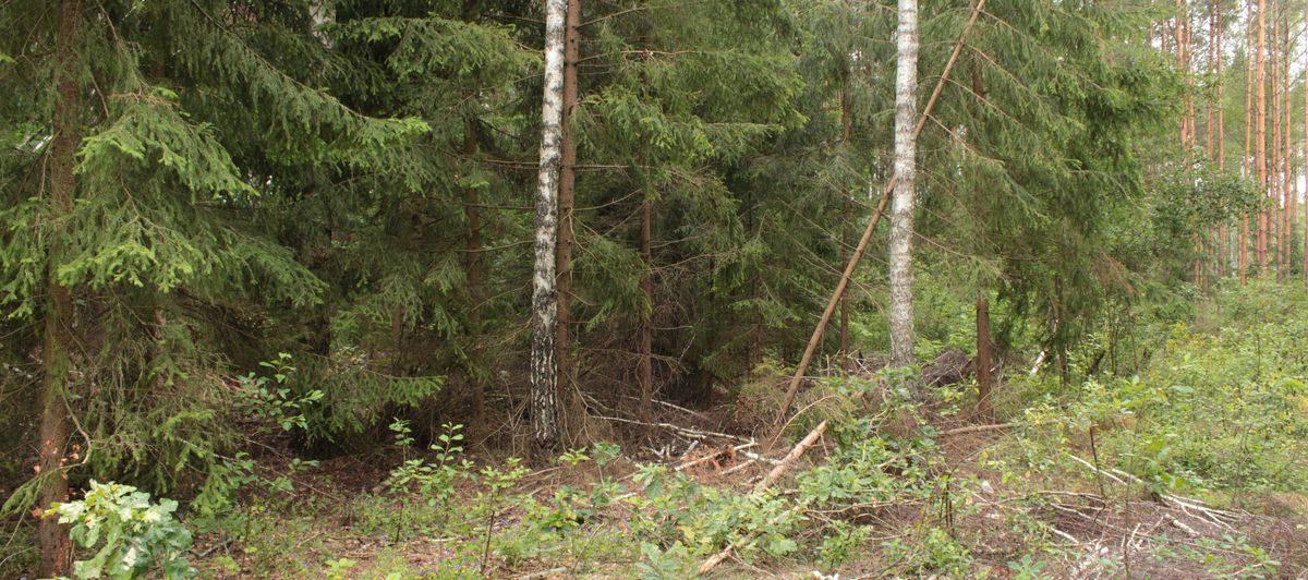 В большинстве лесов Брестской области установился III класс пожарной опасности
