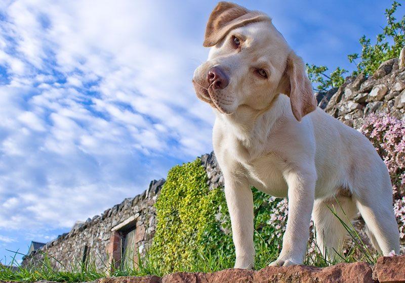 Определены победители фотоконкурса «Верный пес»