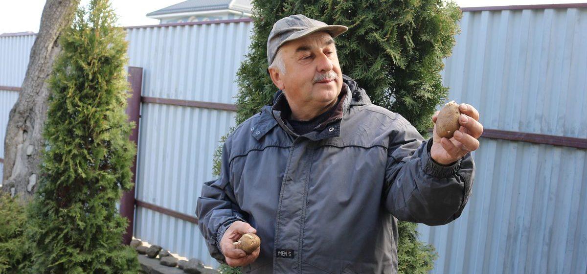Как правильно посадить картофель, чтобы получить хороший урожай (видео)