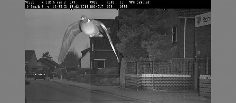 В Германии фоторадар зафиксировал голубя, который превысил скорость
