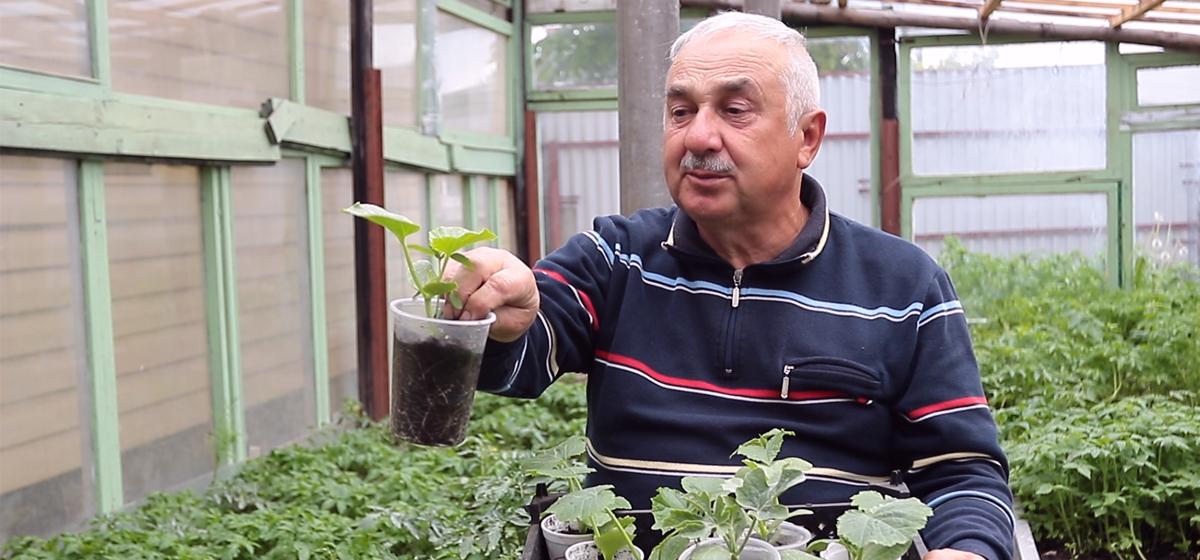Огурцы, тыква, кабачки, арбузы: секреты выращивания и интересные факты. Видео