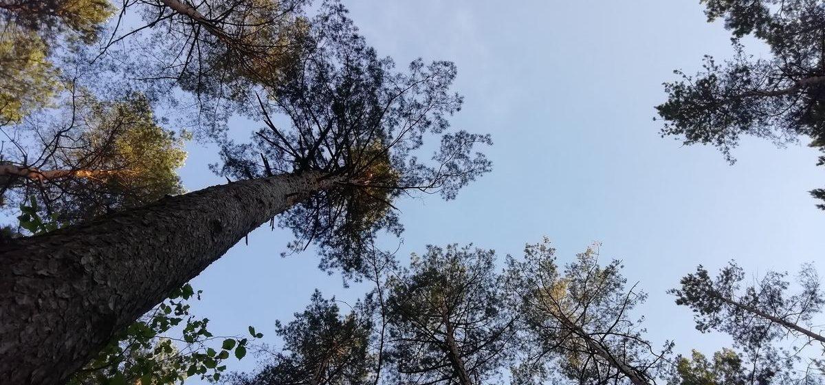 Тепло и ветрено. Метеорологи рассказали о погоде в Барановичах 13 октября