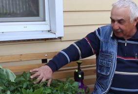 Как повысить урожайность овощей на дачном участке. Видео