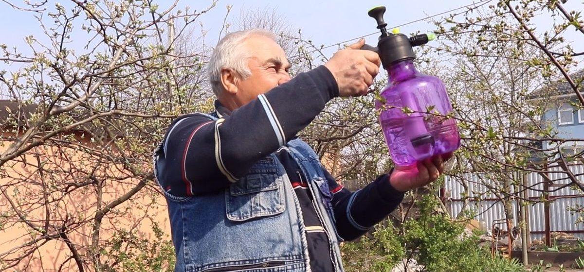 Как защитить плодовые деревья в период цветения от вредителей и болезней (видео)