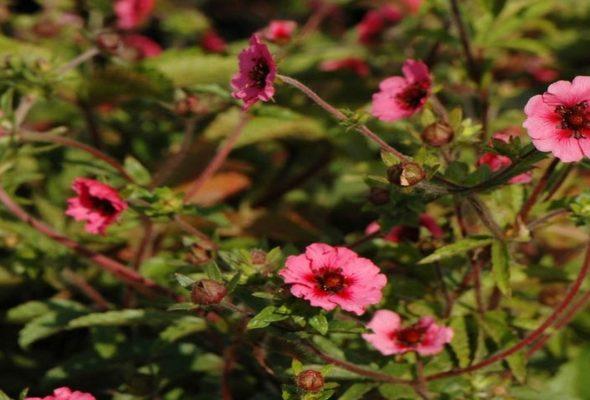 Растения, которые станут украшением вашего участка