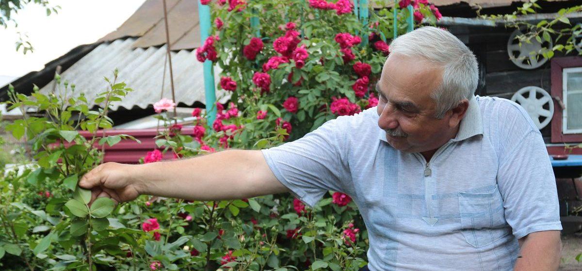 Как защитить огурцы, баклажаны и цветы от паутинного клеща. Видео
