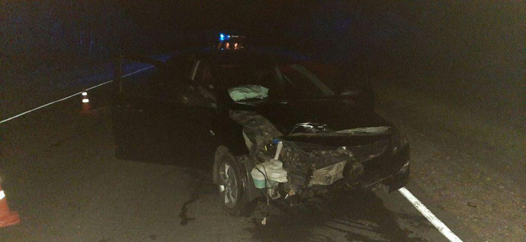 На дороге Барановичи-Ляховичи легковушка насмерть сбила лося