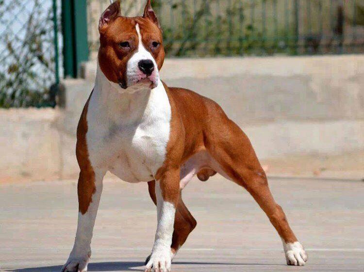 Пса, который покусал детей в Гродно, усыпили. Так решил хозяин