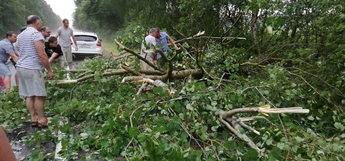 Во время грозы дерево упало на проезжую часть в Ляховичском районе. Фотофакт