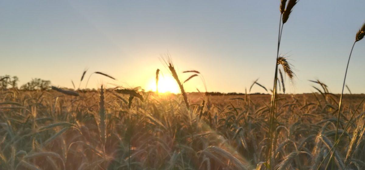 В Беларуси определили районы, неблагоприятные для производства сельхозпродукции