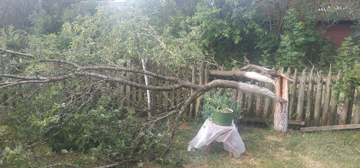 Сломанные деревья и оборванные провода. Последствия грозы в Барановичском регионе на фото читателей Intex-press