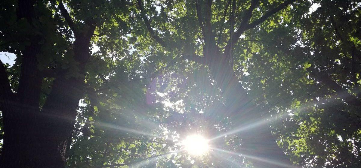 Запрет на посещение лесов в Барановичском районе по-прежнему действует, несмотря на прошедшие дожди