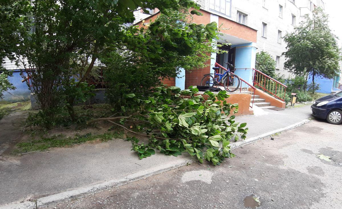 Сломанные стихией деревья во дворах на улице Парковой. Фото: Анжелика Шпицына
