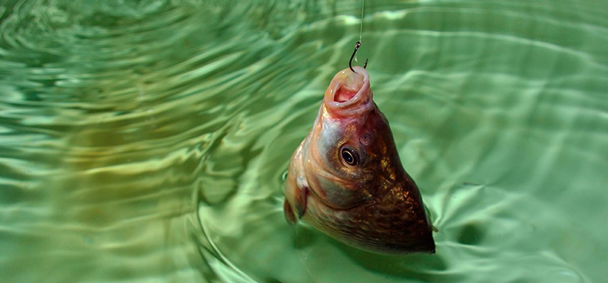 Если повезёт, то не только карасей наловишь! Особенности рыбалки в Миничах*