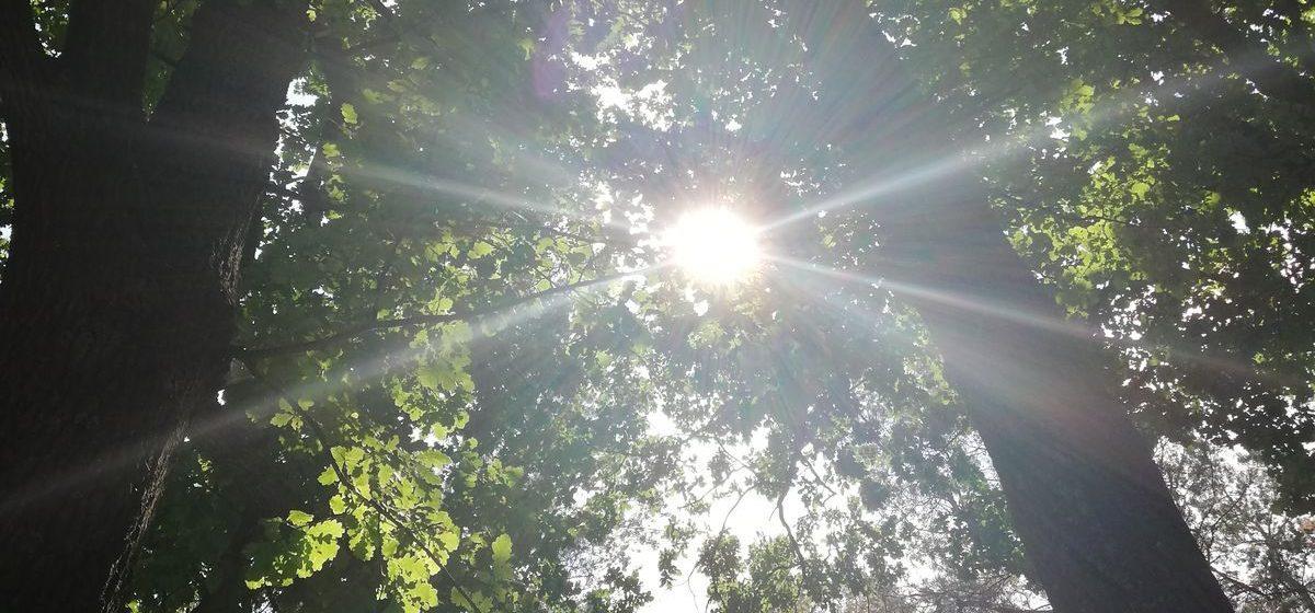 Отступит жара или усилится? Погода в Барановичах 19 июня