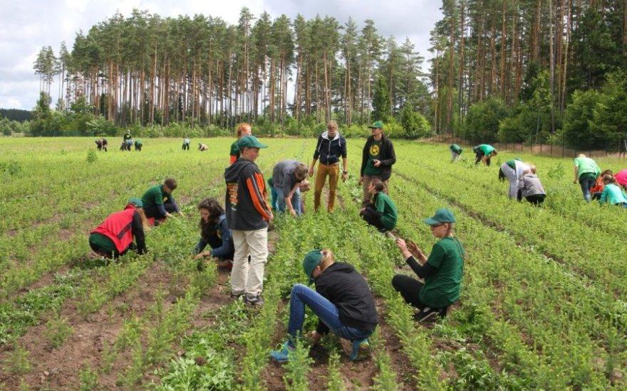 Литовские фермеры рассказали, какую зарплату получают в действительности. «Про €600 на селе никто не слышал»