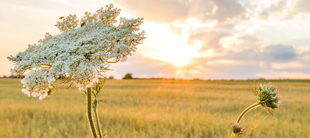 Как погода повлияла на урожай в Барановичском регионе?