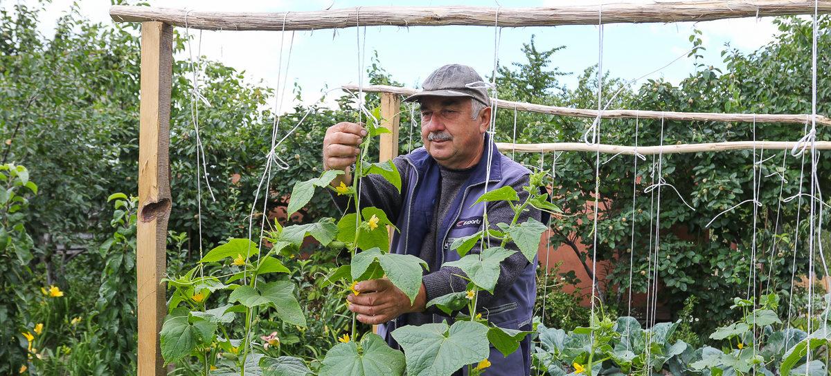 Почему огурцы лучше выращивать на шпалере и зачем арбузу «коврик». Видео