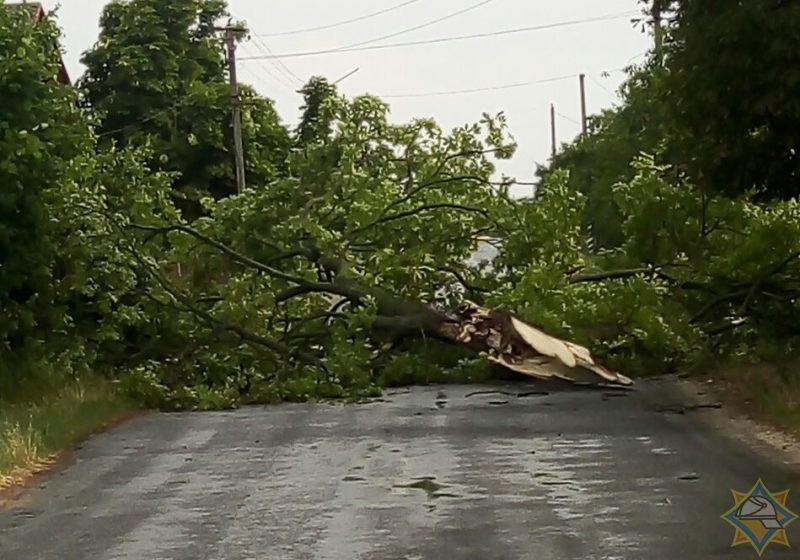 Упавшие на крыши деревья, сорванный шифер и обесточенные деревни. Последствия ураганного ветра в Брестской области. Фото