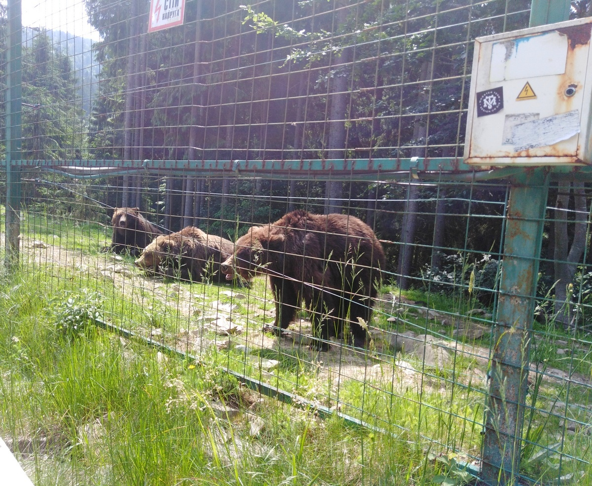 Центр бурого медведя. Фото: Елена ЗЕЛЕНКО