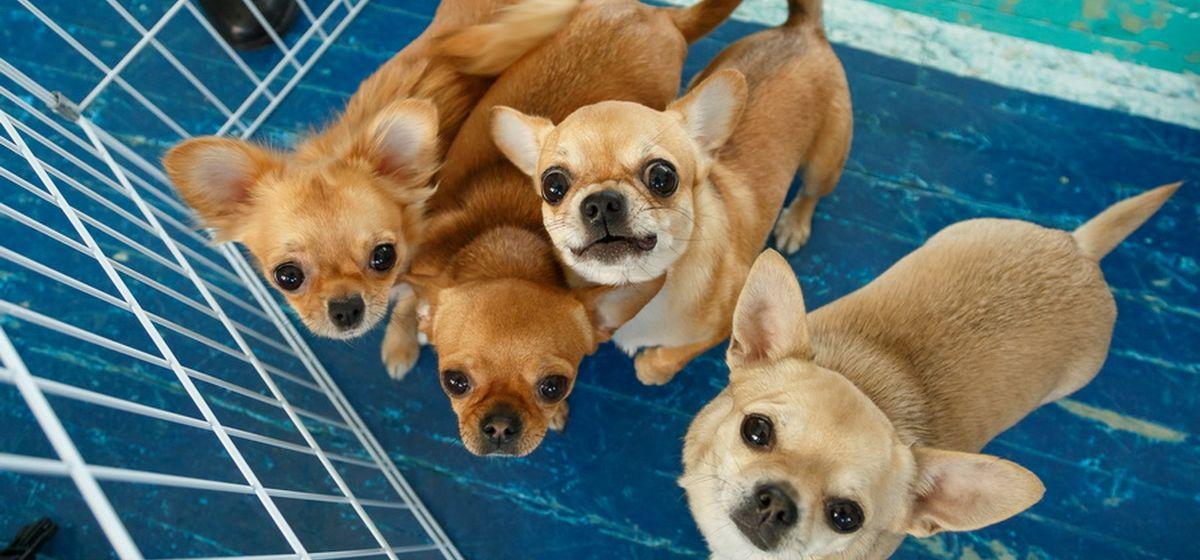 Тест. Что вы знаете о собаках?