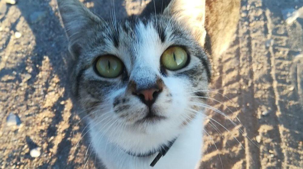 Пьяный пенсионер выбросил двух кошек с 9-го этажа в Мозыре. Возбуждено уголовное дело