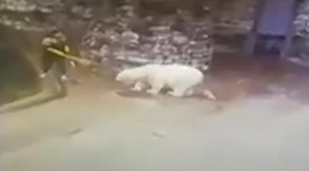 Уборщица отбилась веником от белого медведя в московском зоопарке