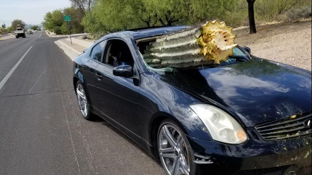 Огромный кактус пробил лобовое стекло легковушки в США
